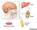 Growth hormone stimulation test - series