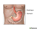 Stomach and stomach lining
