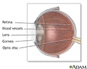 Lateral eye anatomy